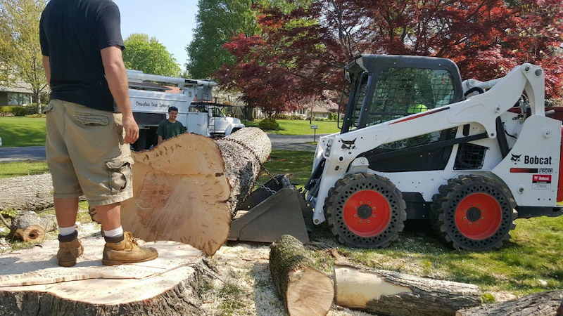 Tree removal process in Geneva by the Lake